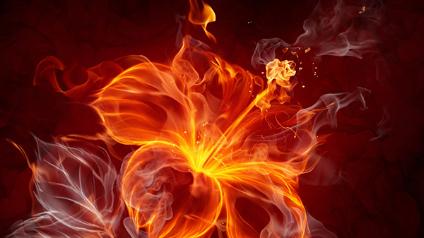 opened-fire-flower-1366x768-wallpaper-12217